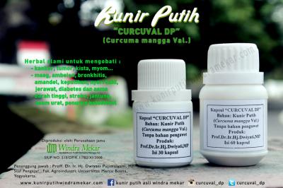 kunir putih, Kunir putih windra mekar curcuval DP Prof Dwiyati jogja, khasiat nya sbg obat kanker, tumor, kista, diabetes, kanker payudara, kanker servick